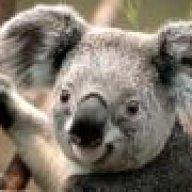 Koalabare