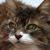 CatNav