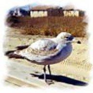oldseagull